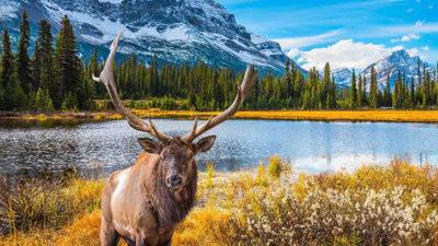 Les meilleurs endroits à découvrir au Canada
