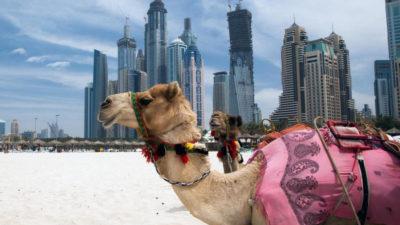 VOYAGE A ABU DHABI